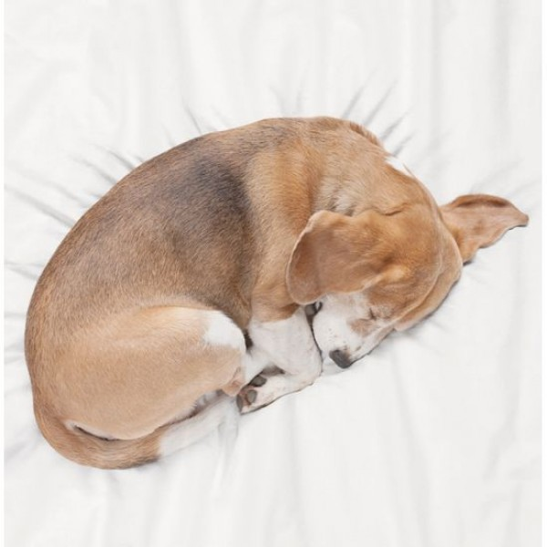 schlaf gut kleiner diegesundheitsexperten. Black Bedroom Furniture Sets. Home Design Ideas