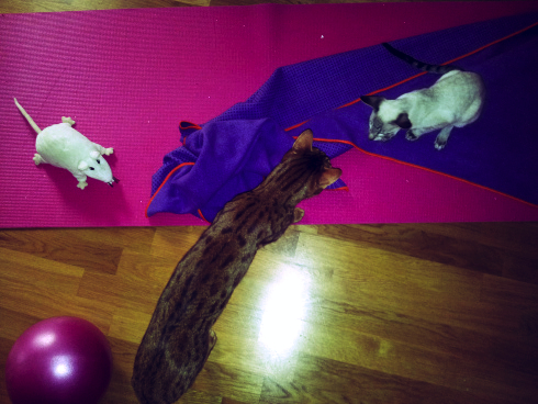 yogini smilla mit diego