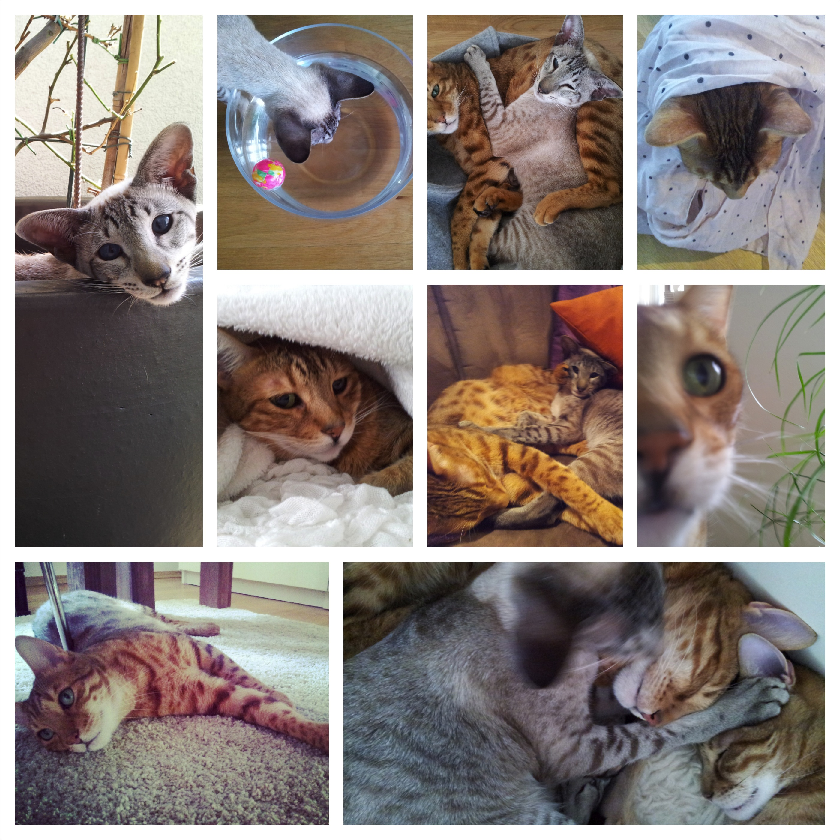Katzen Collage