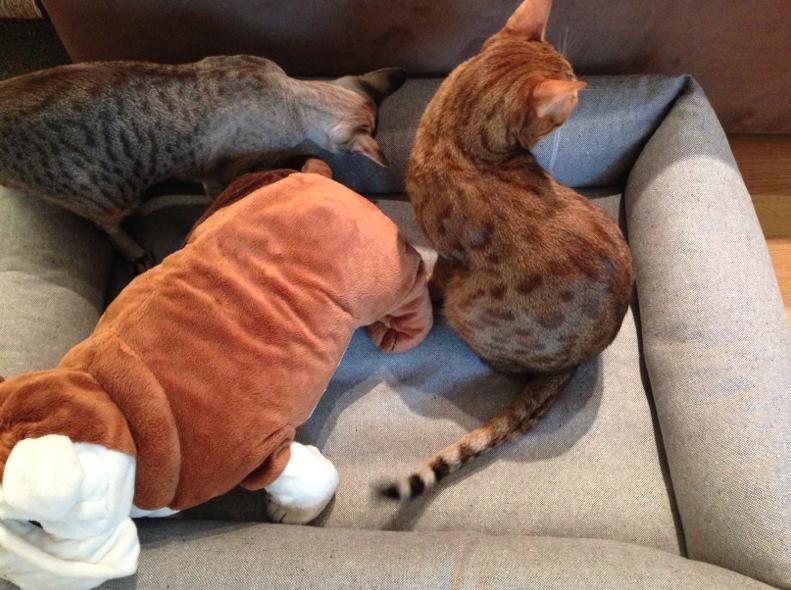 Katzen im Hundebett