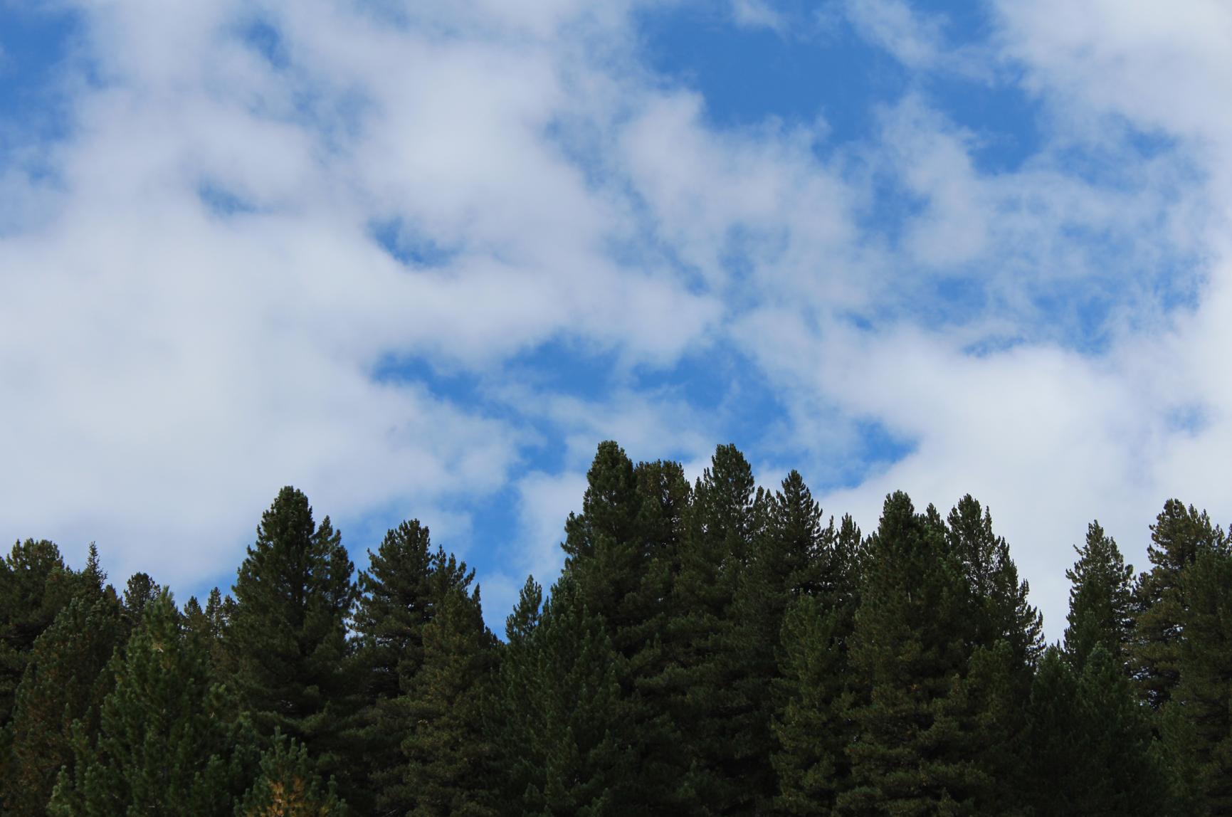 19 Himmel und Bäume