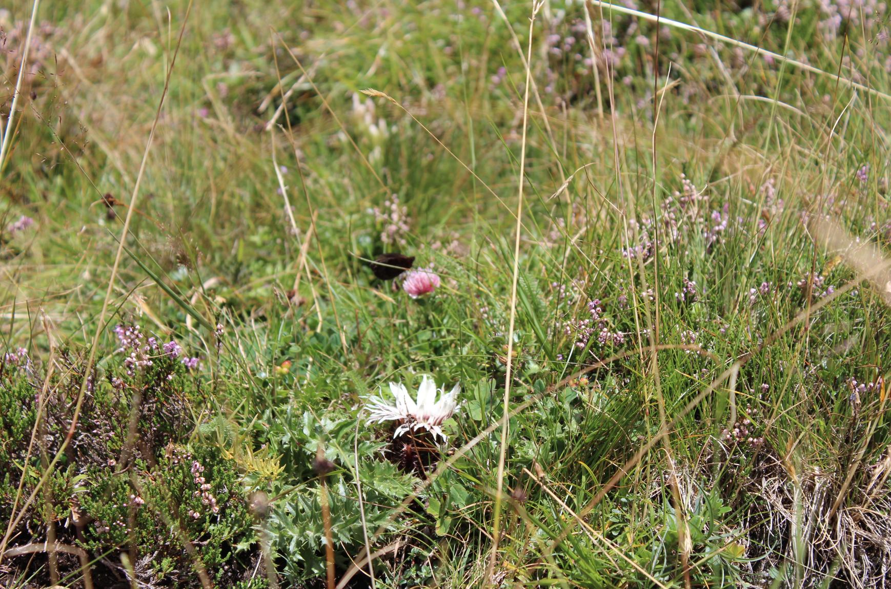 31 Natur Blumen am Bergsee