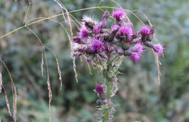 Blumen Natur
