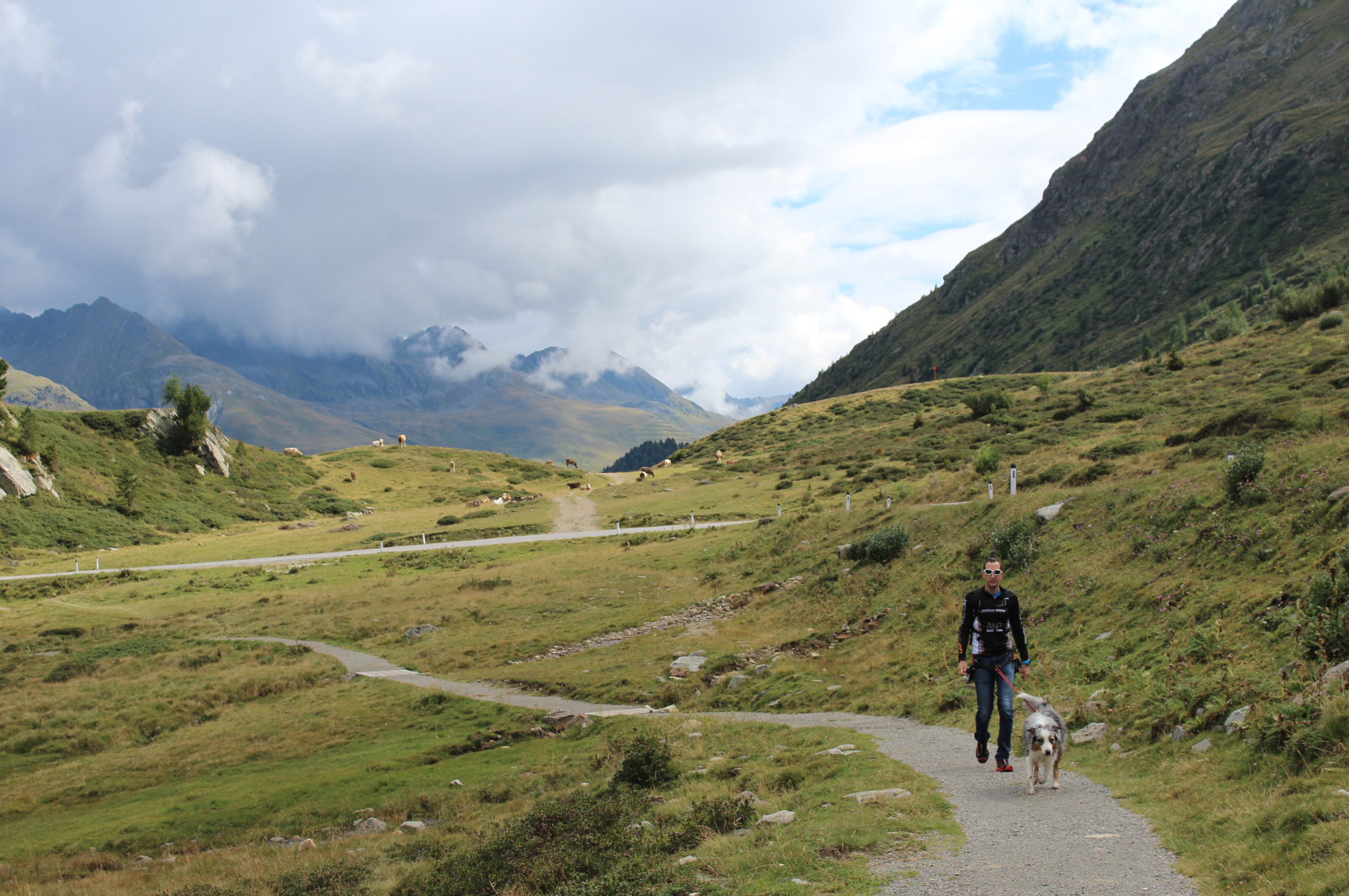 8 Spazieren mit Hund in Osttirol Sattler Sattel
