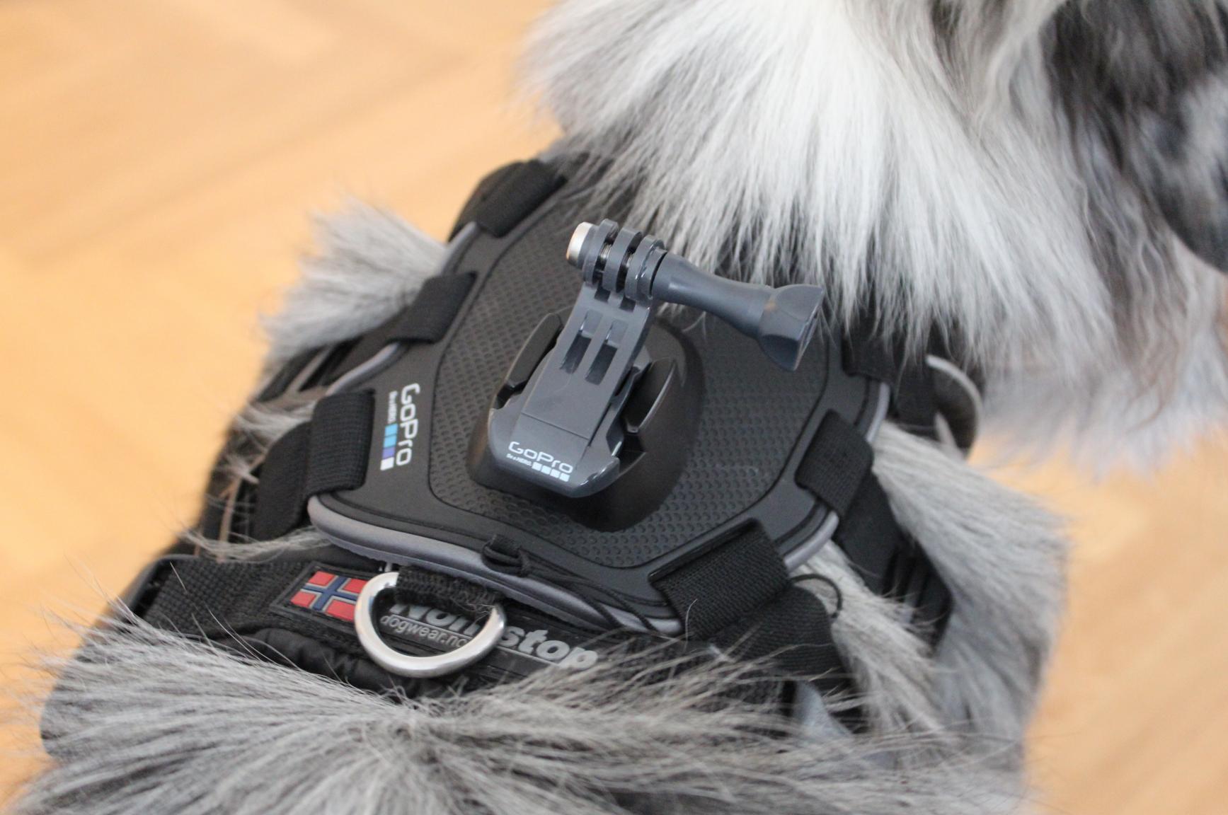 22 Hund mit GoPro Halterung