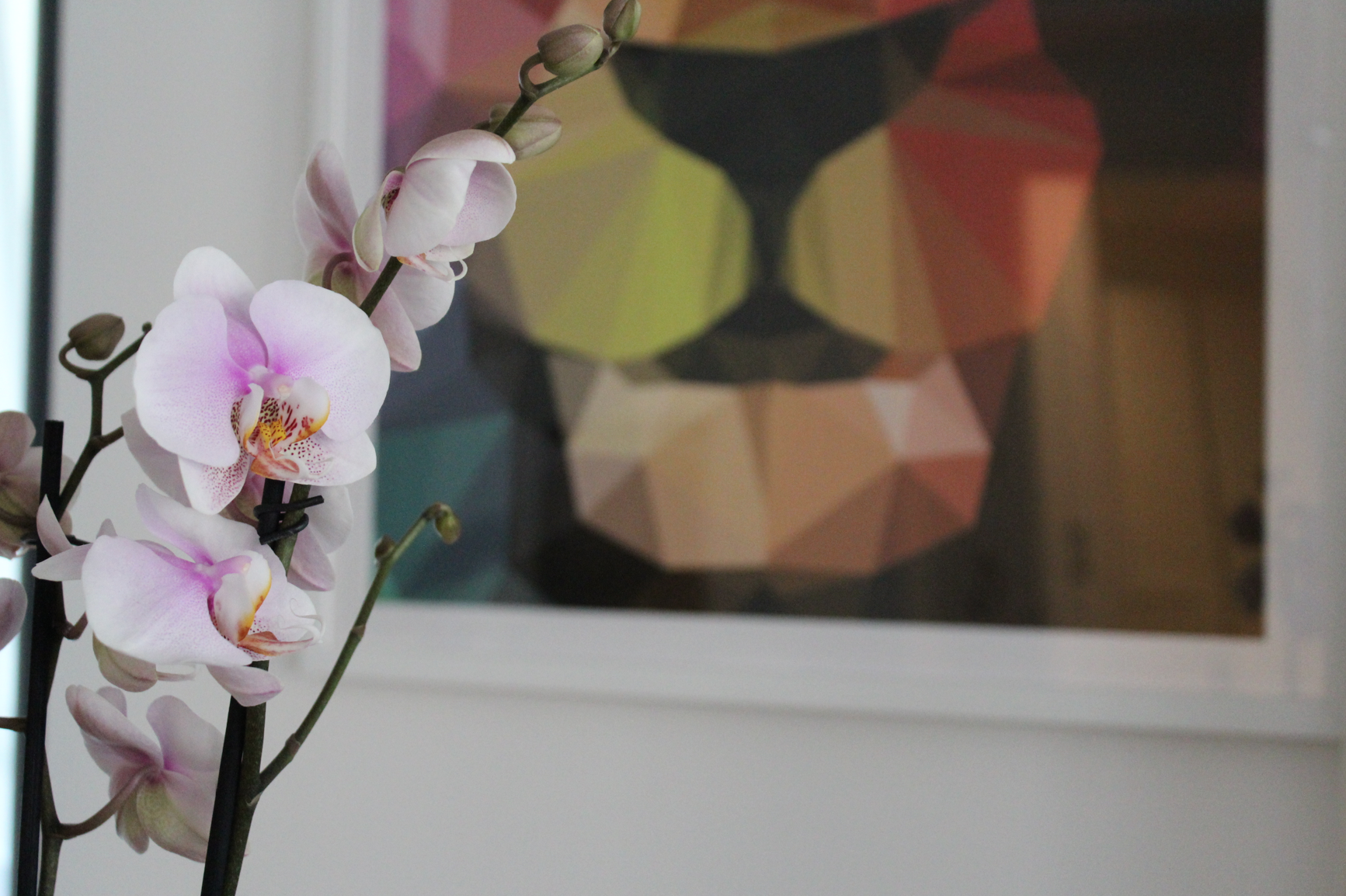 3 Orchidee Home