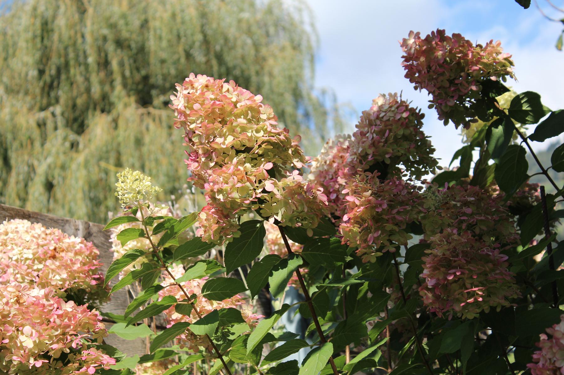 37 Garten Blumen