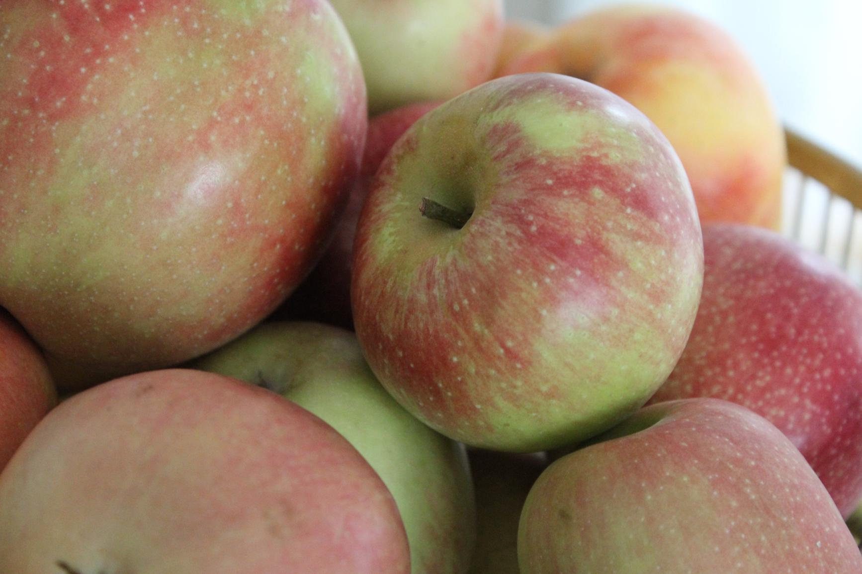 5 Summerred Äpfel