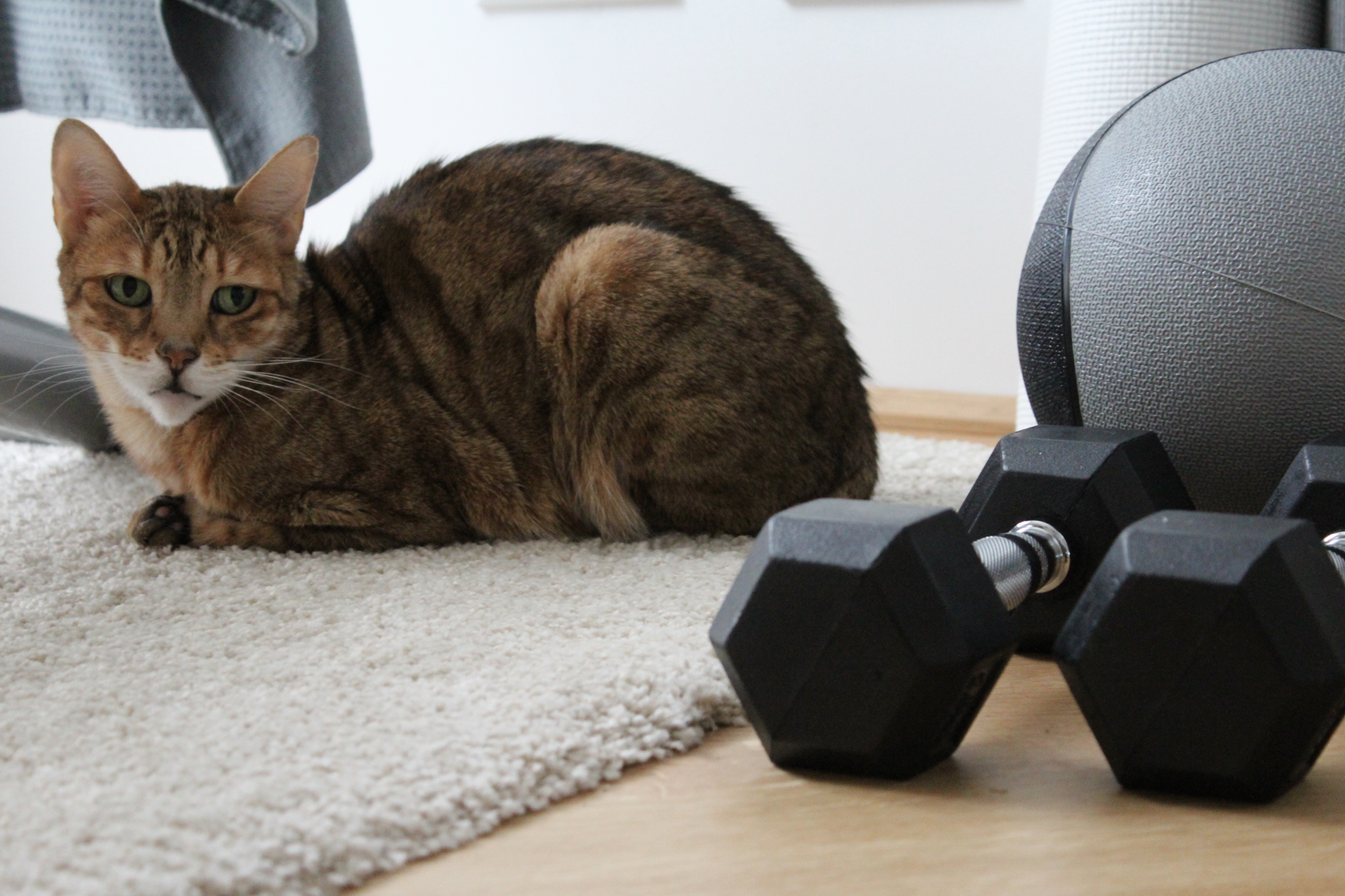 7 Home Gym mit Katze