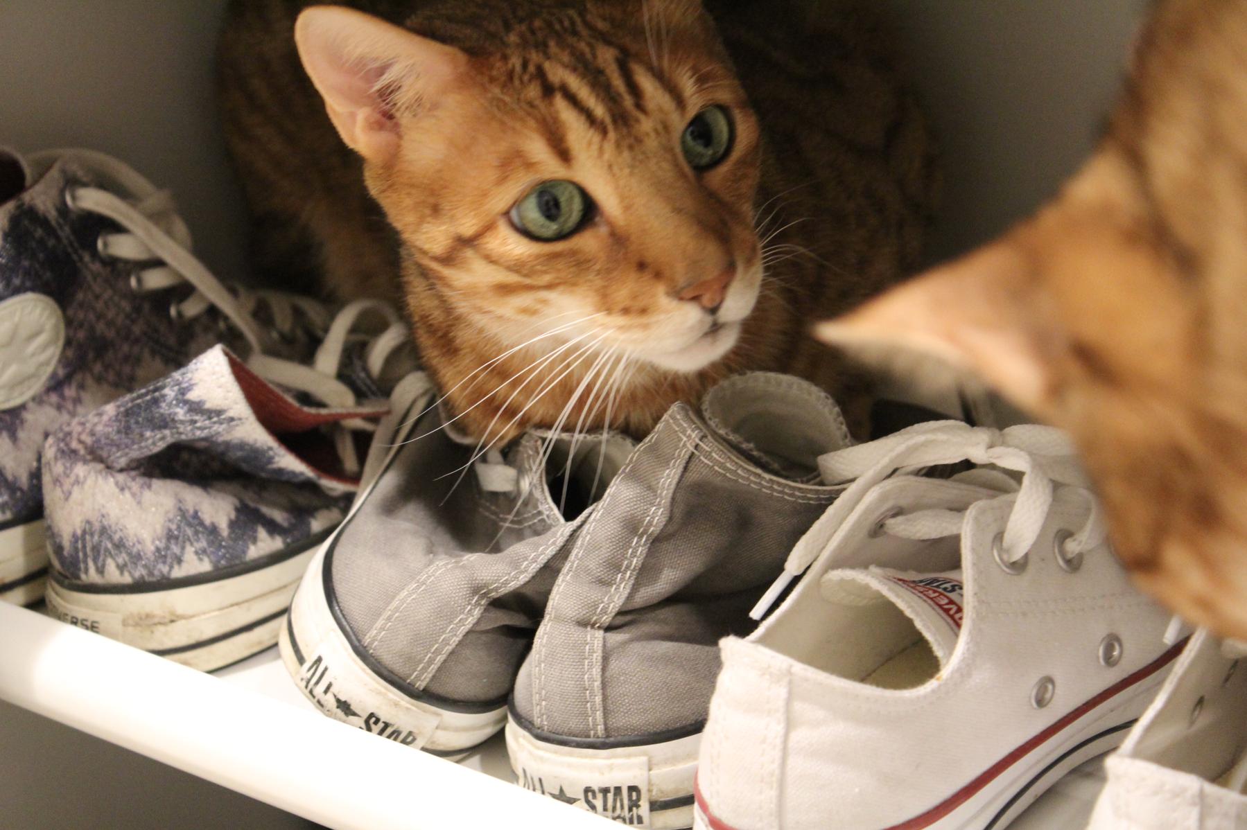 9 Kater im Schuhschrank Converse