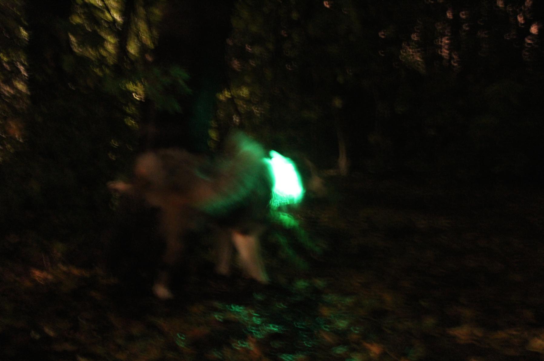 13 Tchibo Leuchthalsband LED Hund im Dunkeln Test