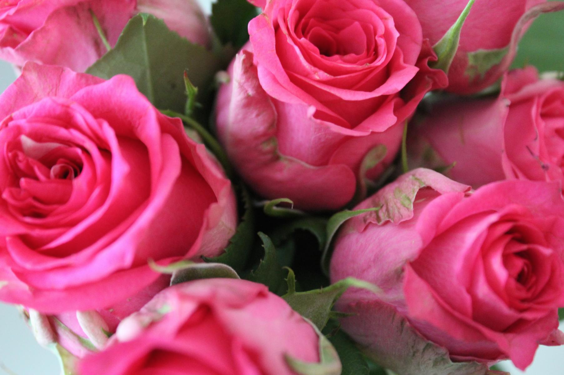 2 Pinke Rosen