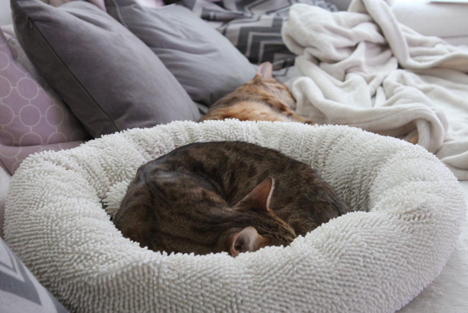 2 Schlafende Katzen