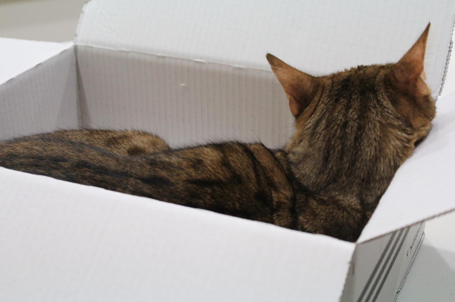 10 Katze im Kartom