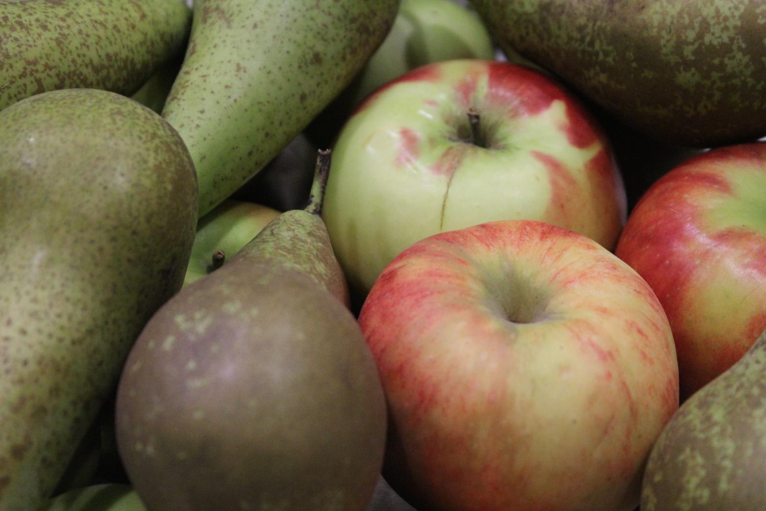 17 Herbstobst Apfel Birne