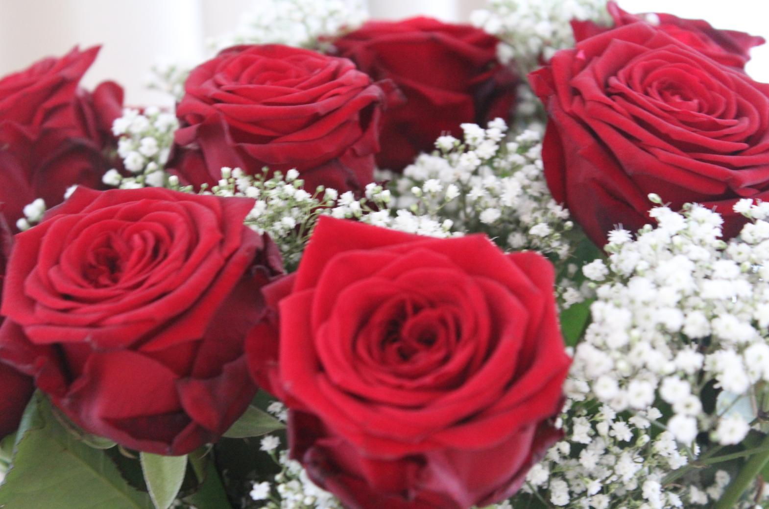 17 Rote Rosen