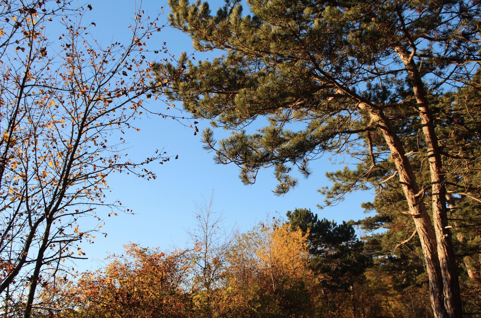 26 goldener Herbst