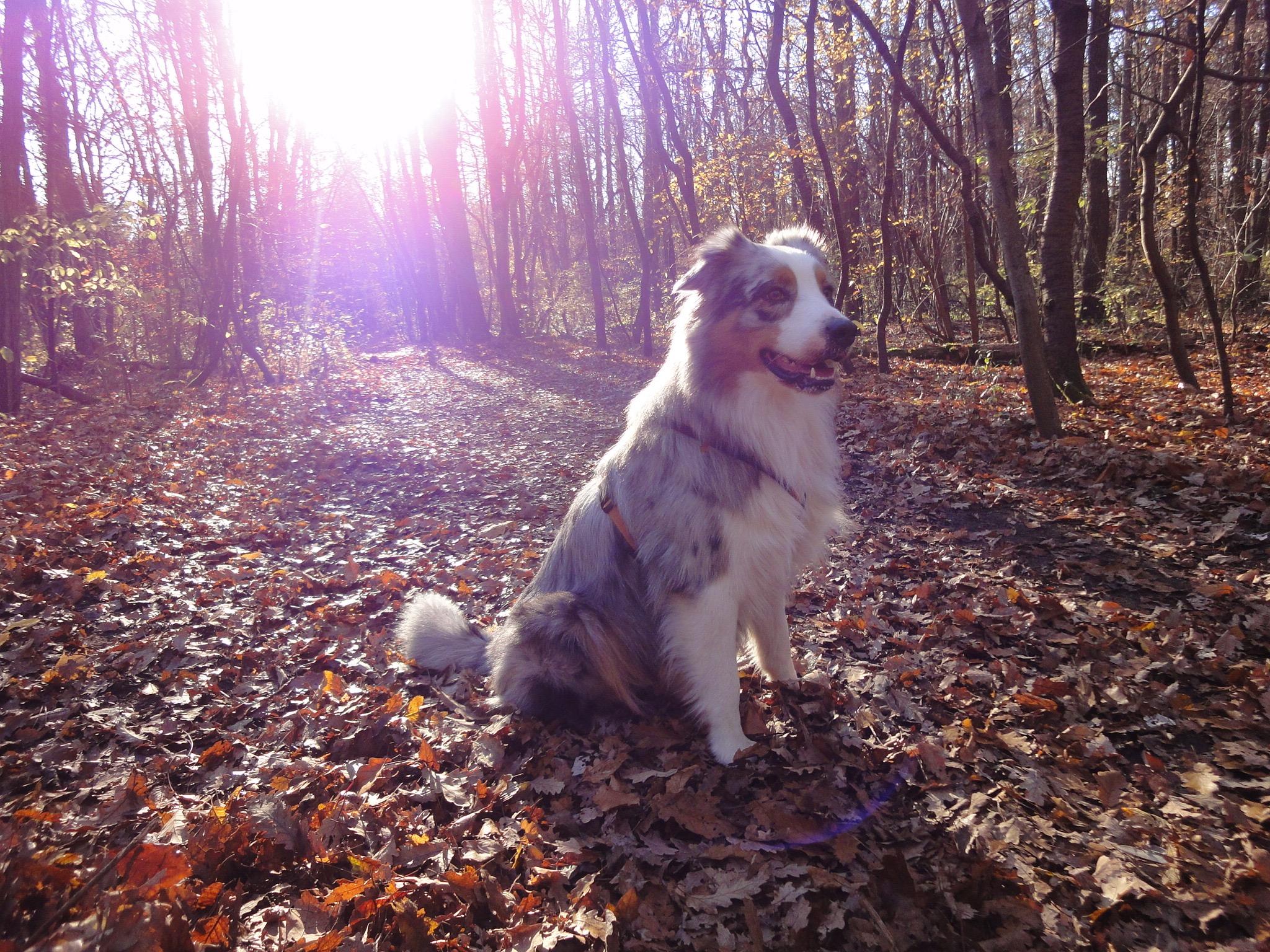 6 Achilles in der Herbstsonne