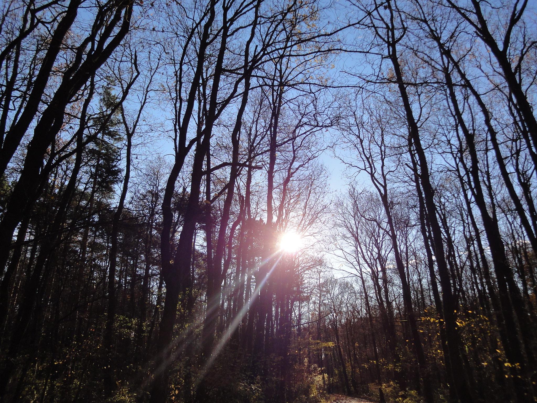 7 Herbstsonne
