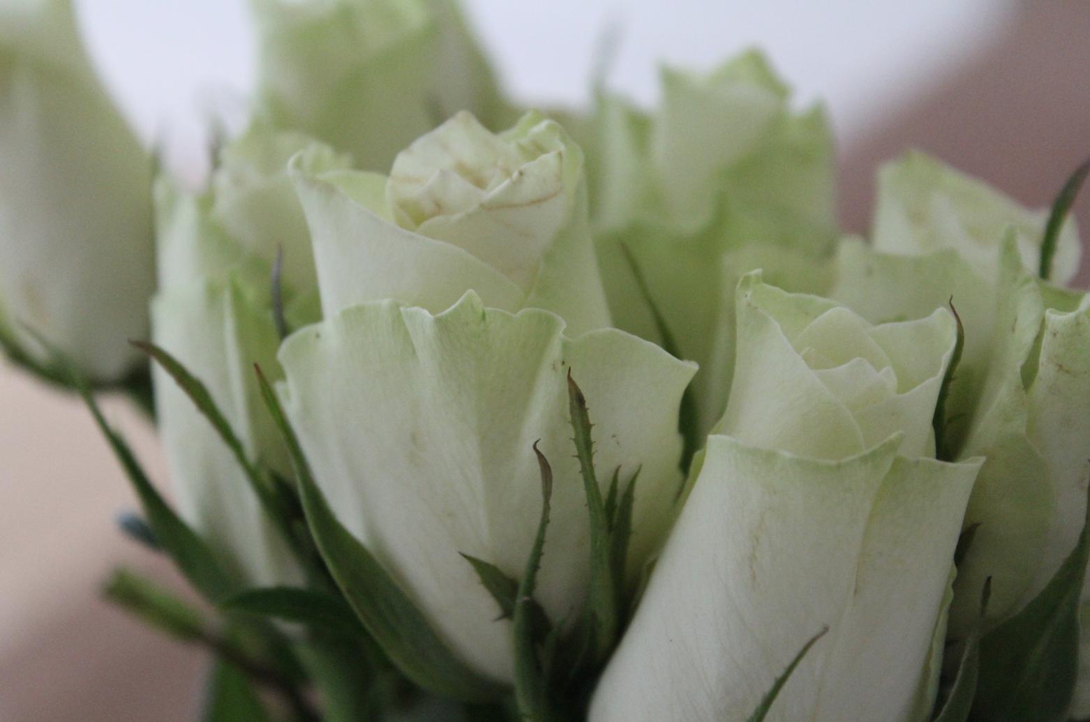 7 Weiße Rosen