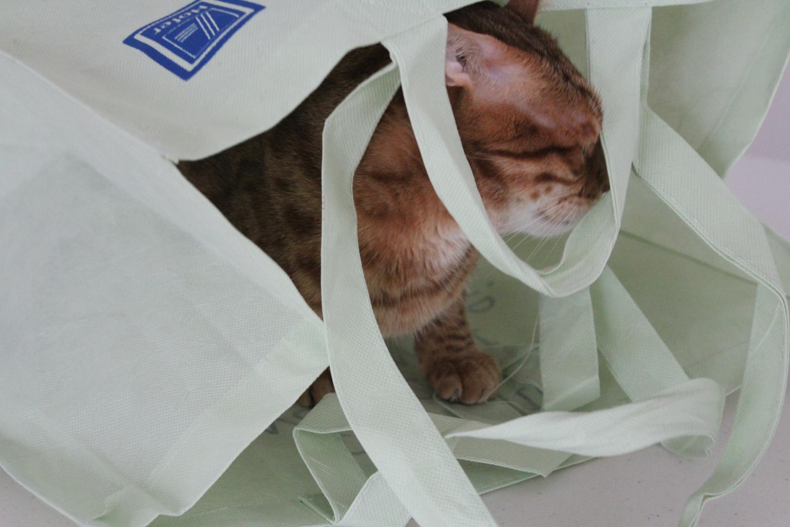 8 Cat Stuff