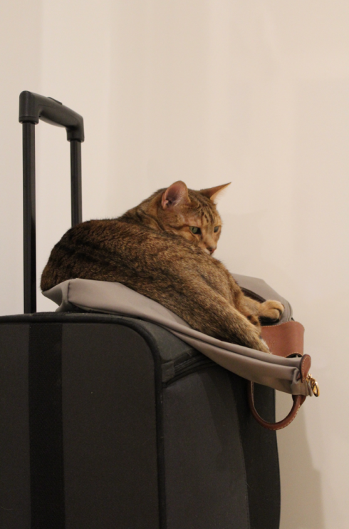 8 Katze auf Koffer