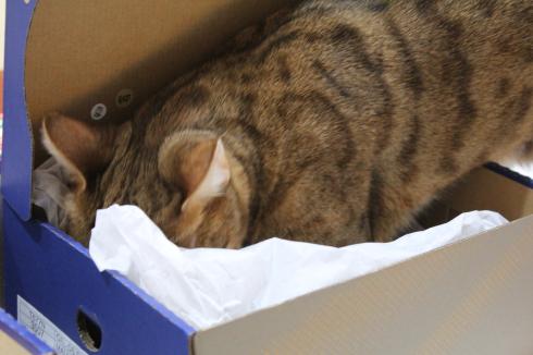 8 Katze in Karton
