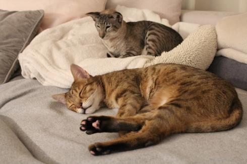 6 Schlafende Wohnungskatzen