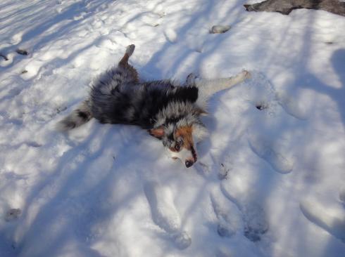 10 Hund im Schnee