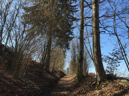14 Spaziergang in der Natur