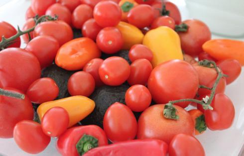 15 Tomaten Paprika Avocados