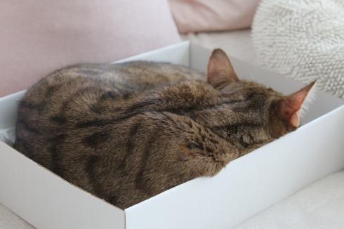 16 Schlafende Katze in Karton