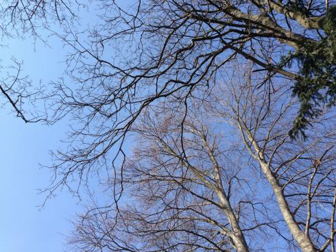 29 Laufen im Frühling Wien Hietzing
