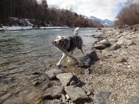 8 Spielen am Wasser Hund Aussie
