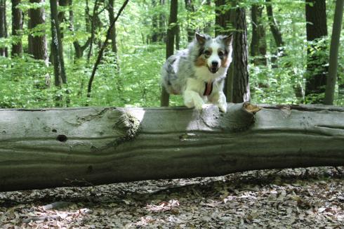 14 Springender Hund