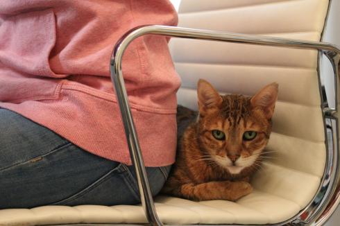 16 Arbeiten mit Katze Bürokatze