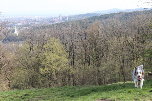 33 Blick über Wien