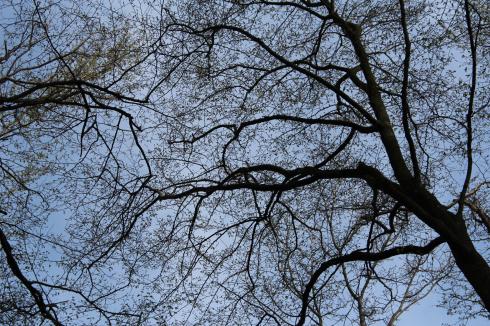 35 Frühling Baum Natur