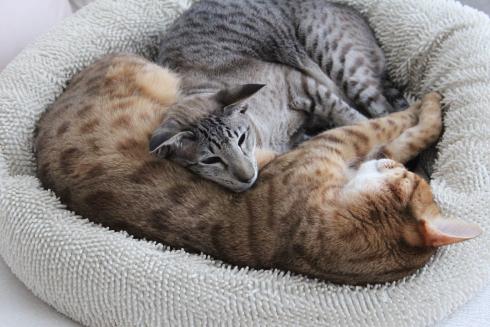 5 Kuschelnde Katzen
