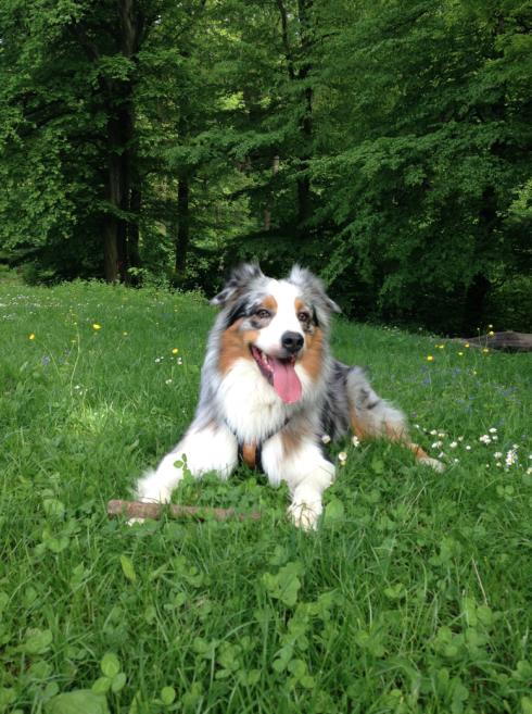 14 Happy Dog