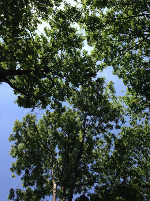 25 Bäume und Himmel