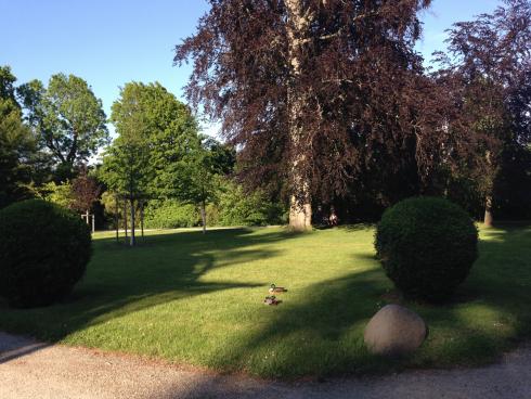 30 Enten in Schönbrunn