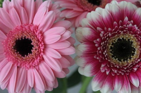3 Blumenliebe pink