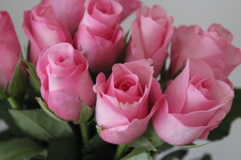 6 Pinke Rosen