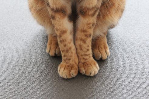 Love, Pets & Harmony Yoga Cat