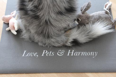 Love, Pets & Harmony mit Hund