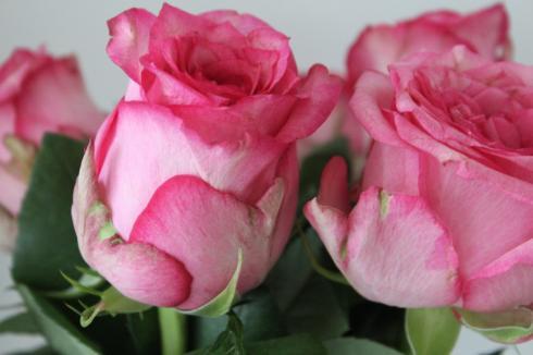13-rosen