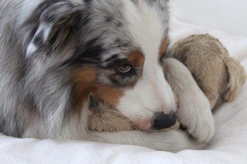 14-hund-nuckelt