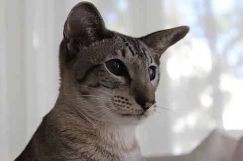 20 Schmusspatz Katze