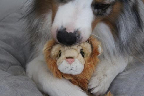 22 Hund trifft Löwe